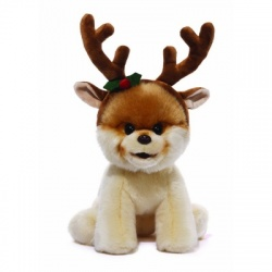 Boo The Dog With Reindeer Antlers
