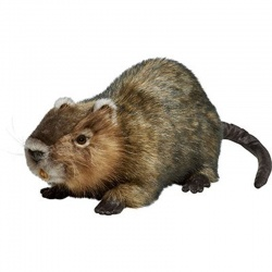 Hansa Water Rat (Ragondin) Soft Toy